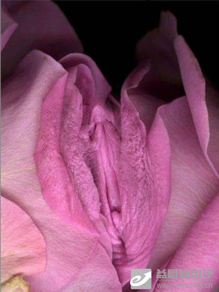 神奇的大自然器官女人花 香车美女